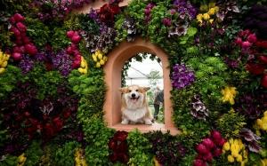 Лондонская выставка цветов в Челси